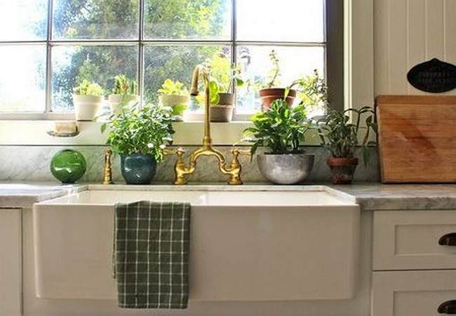 Какие растения по фен шуй можно держать на кухне