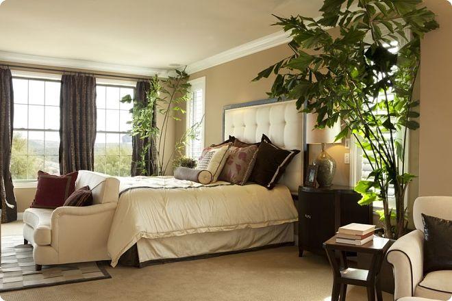Цветы для спальни: какие можно, а какие нет, рекомендации по фен-шуй