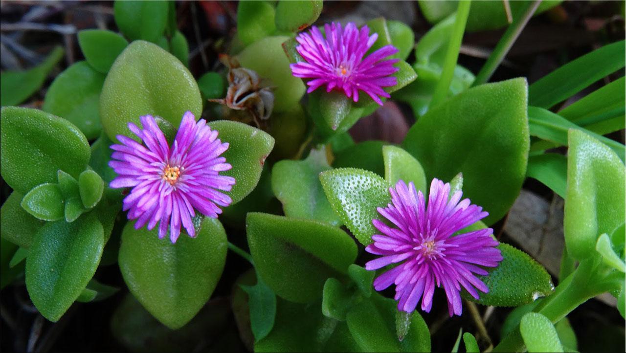 Домашние цветы фото с мелкими цветами