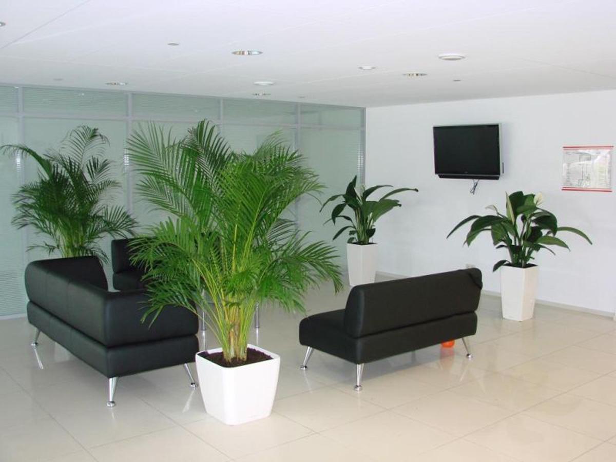 Офисные цветы с названием и фото