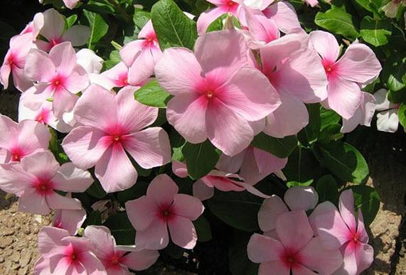 Какая чистая и ясная окраска цветка…