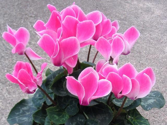 Цветки некоторых видов ароматны