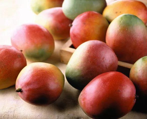 Особенность плодов — разнообразие формы размера и цвета, наблюдающееся на одной кроне
