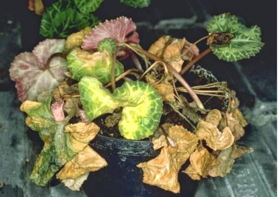 Увядание растения
