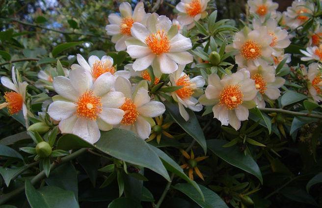 Цветки приятно пахнут