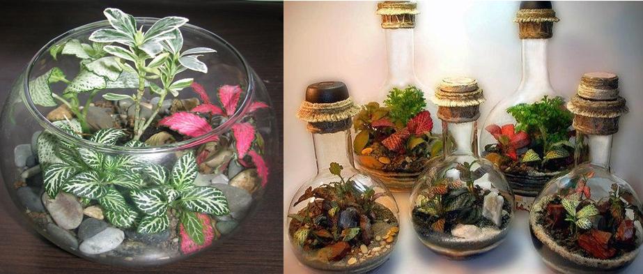 Композиция в аквариуме и «сады в бутылке»