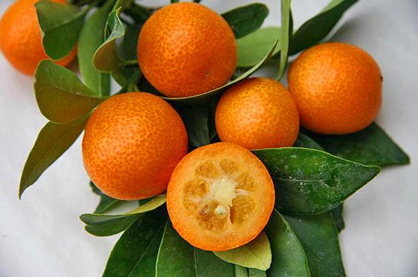 По строению Кумкват напоминает плоды цитрусовых