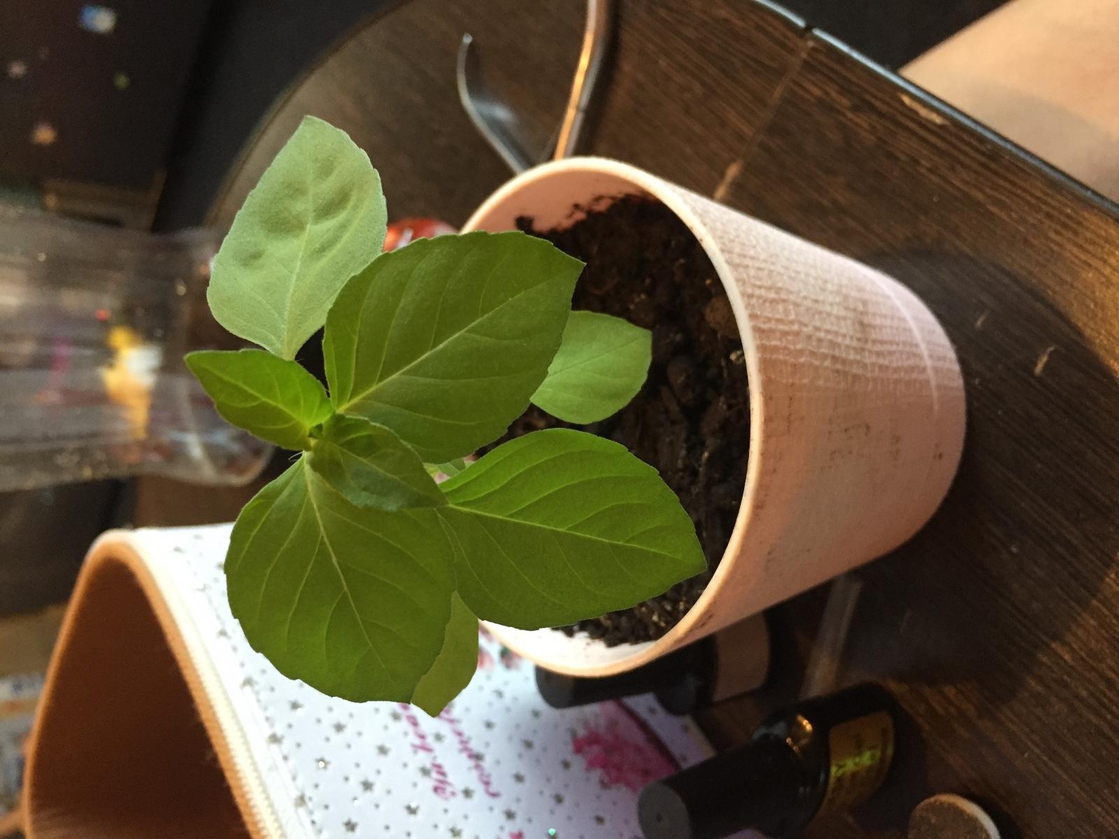 Антуриум выращивание из семян когда сажать 3