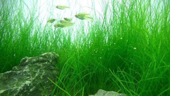 Лучшие аквариумные растения - каталог с фотографиями и названиями