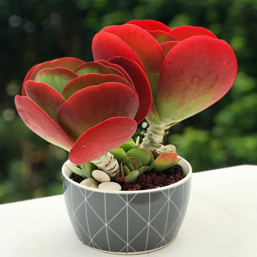 самые редкие комнатные растения фото и названия абхазия картинки