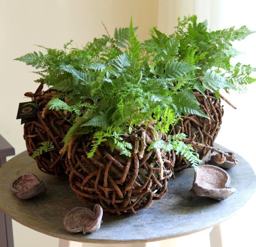 Каждое растение вместе с корзинкой погружается в воду при поливе
