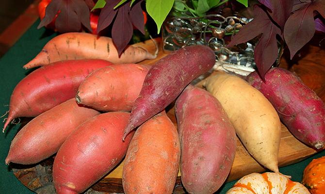 Клубни батата по содержанию крахмала превосходят картофель
