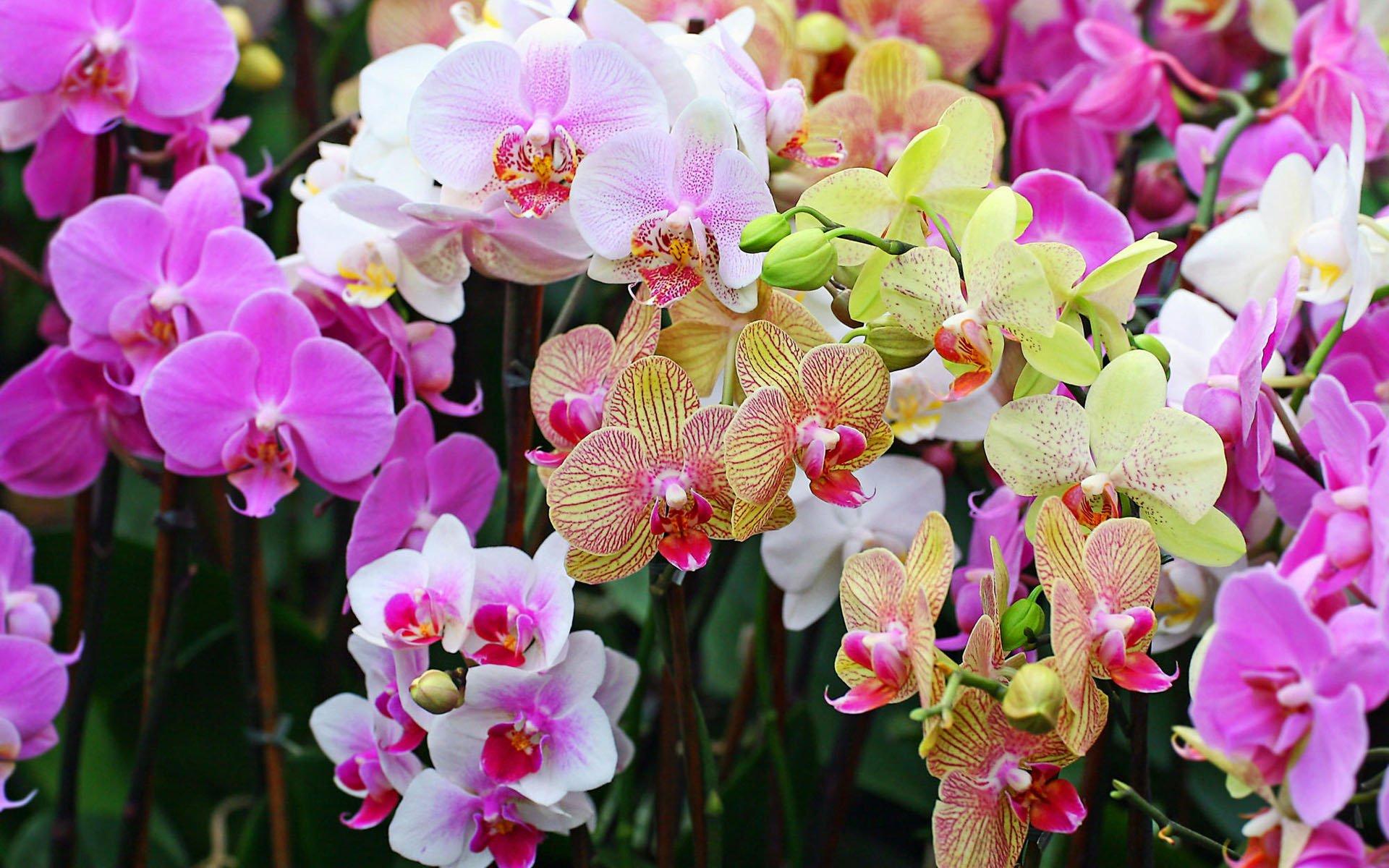 Свою благодарность растение «выскажет» вам длительным и неповторимым зрелищем – цветением