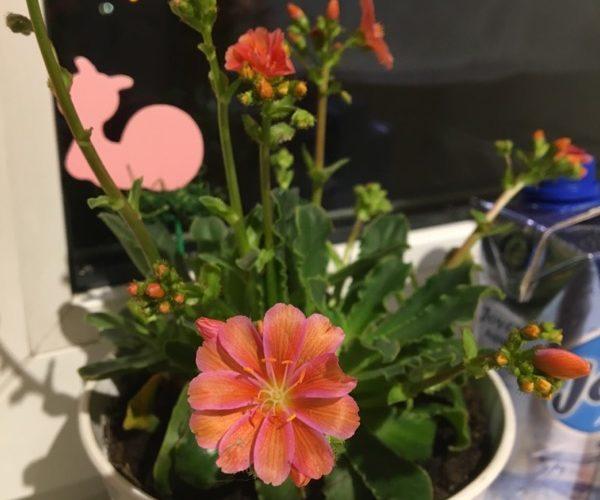 Растение с розовыми цветами