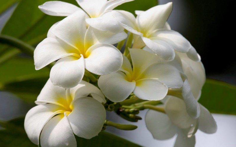 Белый цветок с желтой серединкой