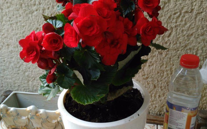 Красивые красные цветки
