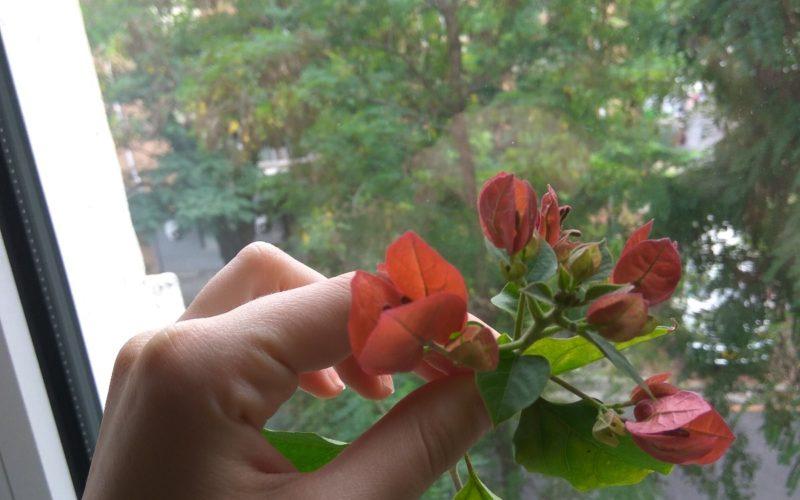 Красный цветок с плоскими вертикальными лепестками