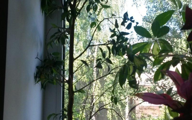Зеленое деревце