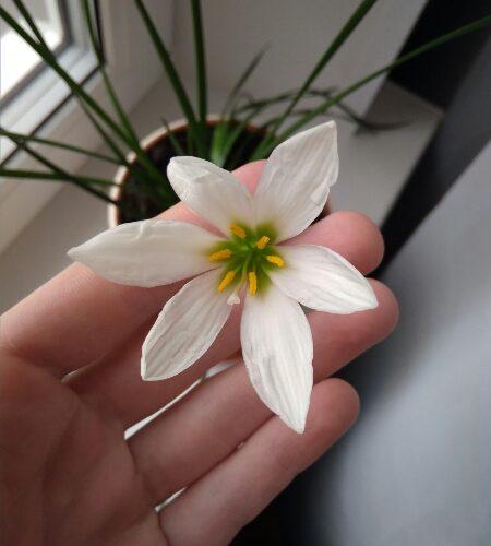 Зелёное растение с белыми цветками
