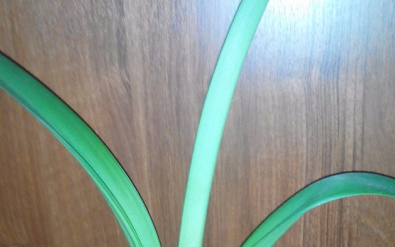 Растение с длинными мягкими листьями