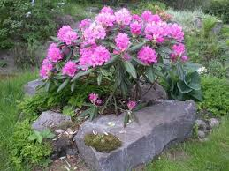 Зеленое растения с розовыми цветками
