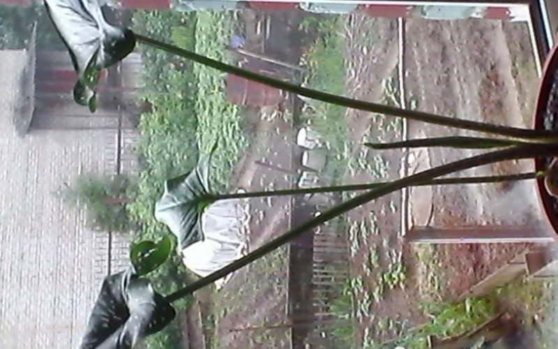 Зеленое растение с длинными стеблями