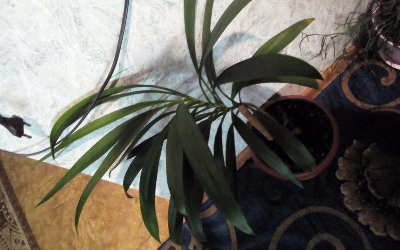 Растение с зелёными листами