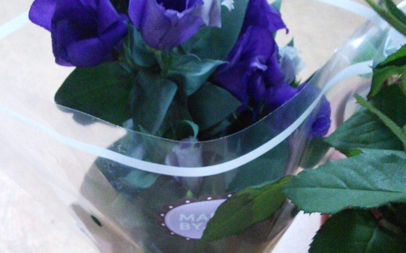 Зеленое растение с синими цветами