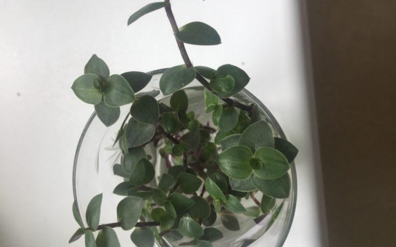 Зеленые маленькие листочки