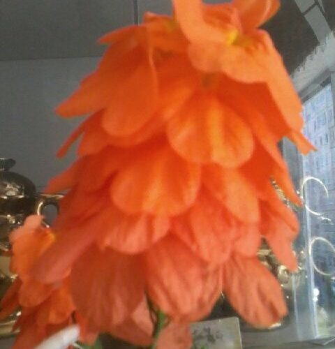 Тонкий стебель с оранжевыми цветами