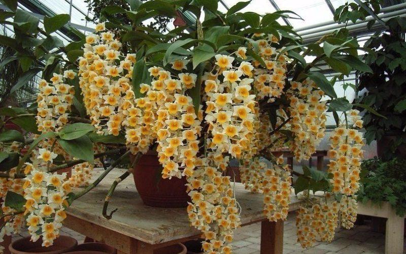 Зеленое растение с желтыми цветками
