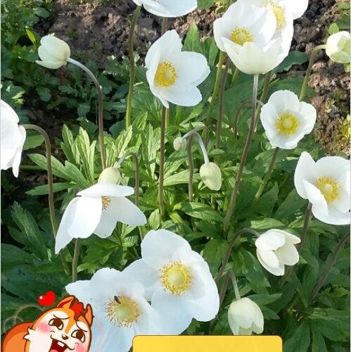 Белый цветок с лепестками