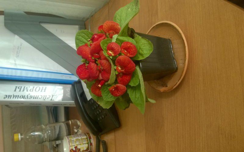 Цветок с красными цветками