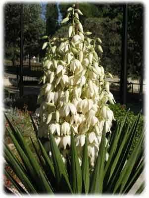 Высокое растение с зелеными колокольчиками