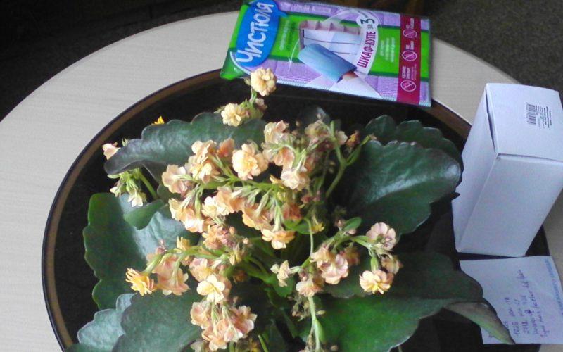 Зелёные растение с желтыми цветами