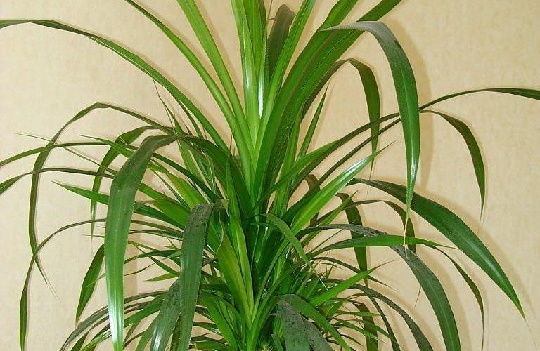 Растение с длинными листьями