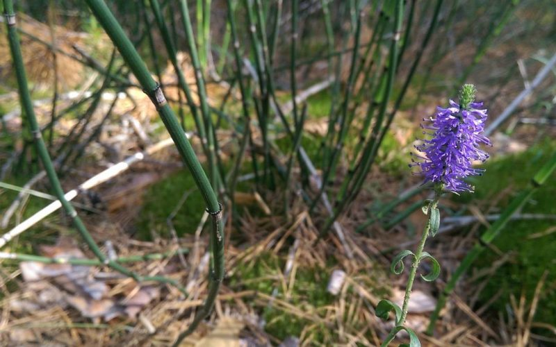 помогите определить что за цветок