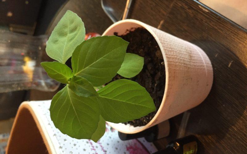 Что это растёт?