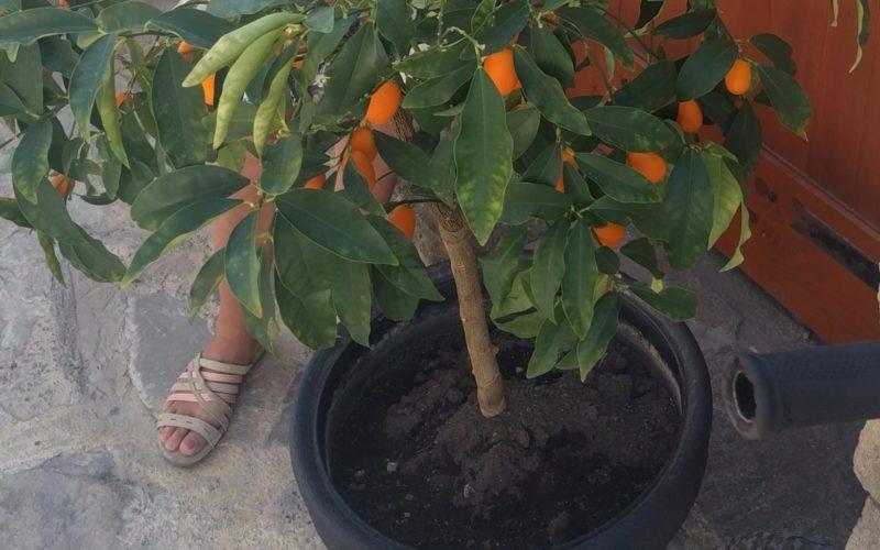 Растение с мягкими плодами