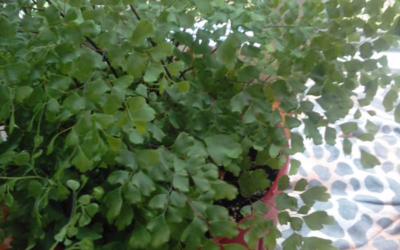 Чудо-растение