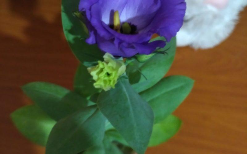 Что за цветок