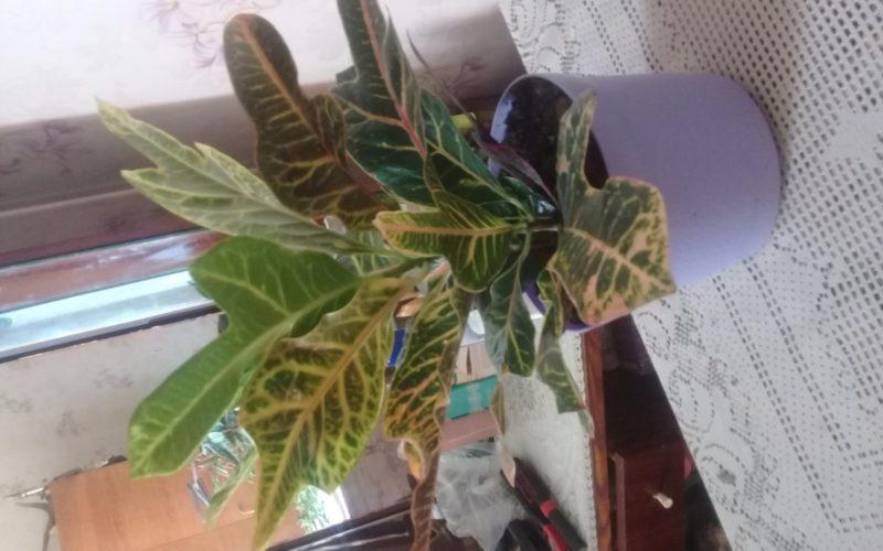 Помогите узнать что это за растение