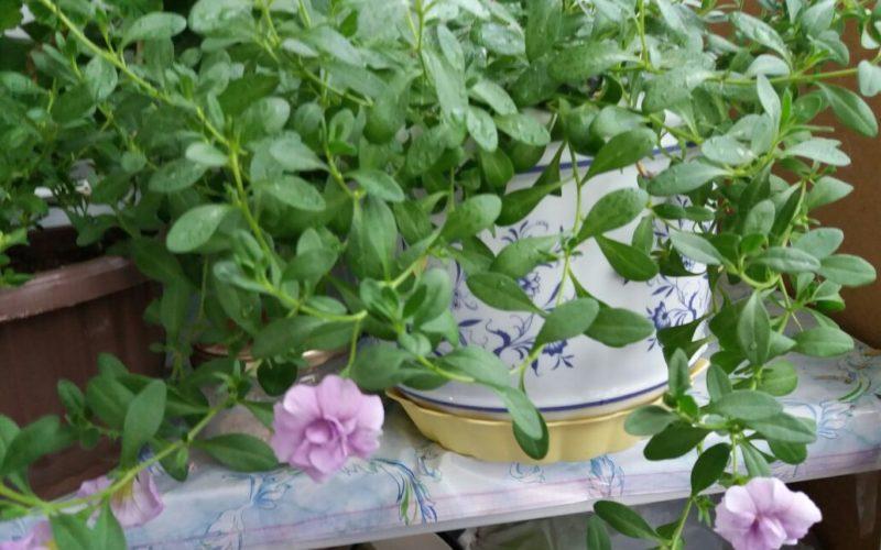 Зеленое с розовыми цветами