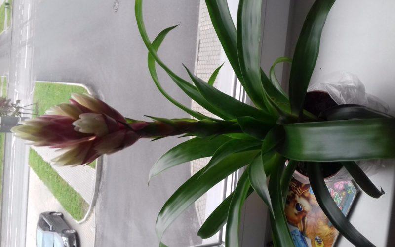 Зелёное растение с белым цветком