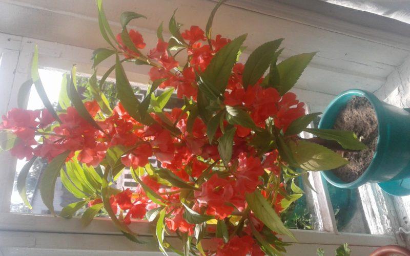 Красный стебель и на нем цветы