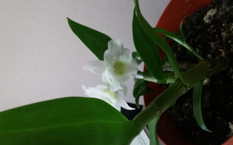 растение с белым цветком среднего размера
