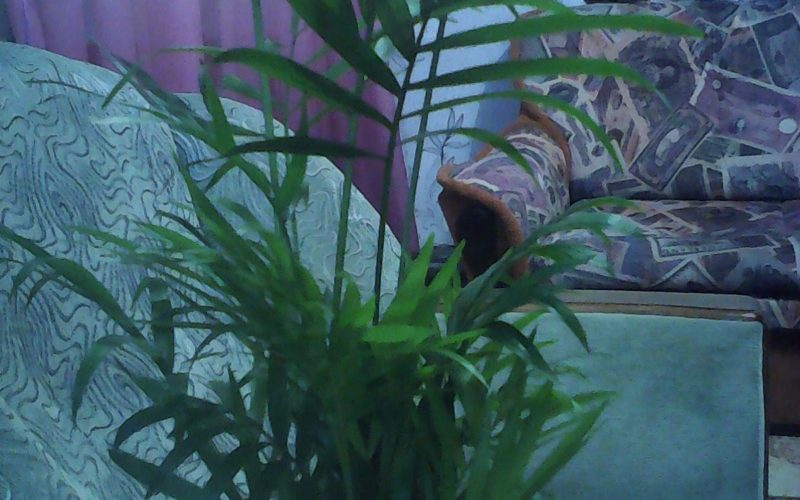 Зеленое растение листья узкие и длинные