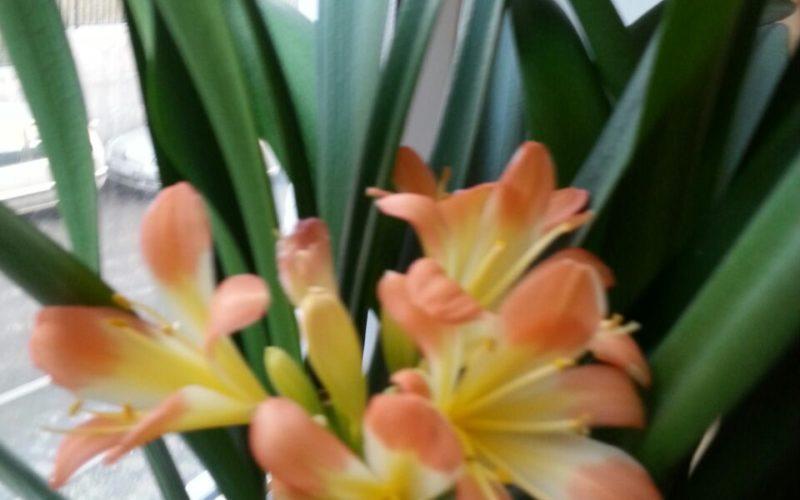 Зелёное растениесли с рыжими цветами