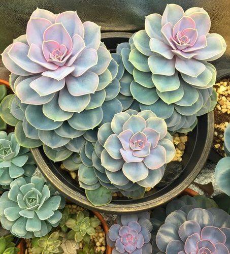 Какое-то красивое растение