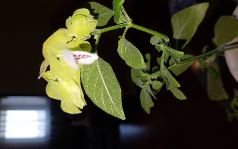 Зеленое с белым цветком